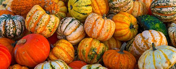 pumpkins-slider