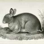 The Miriam and Ira D. Wallach Division of Art, Prints and Photographs: Print Collection, The New York Public Library. (1866 - 1878). Deux lapins, la pluie, un oiseau qui vole. Retrieved from http://digitalcollections.nypl.org/items/510d47da-438b-a3d9-e040-e00a18064a99